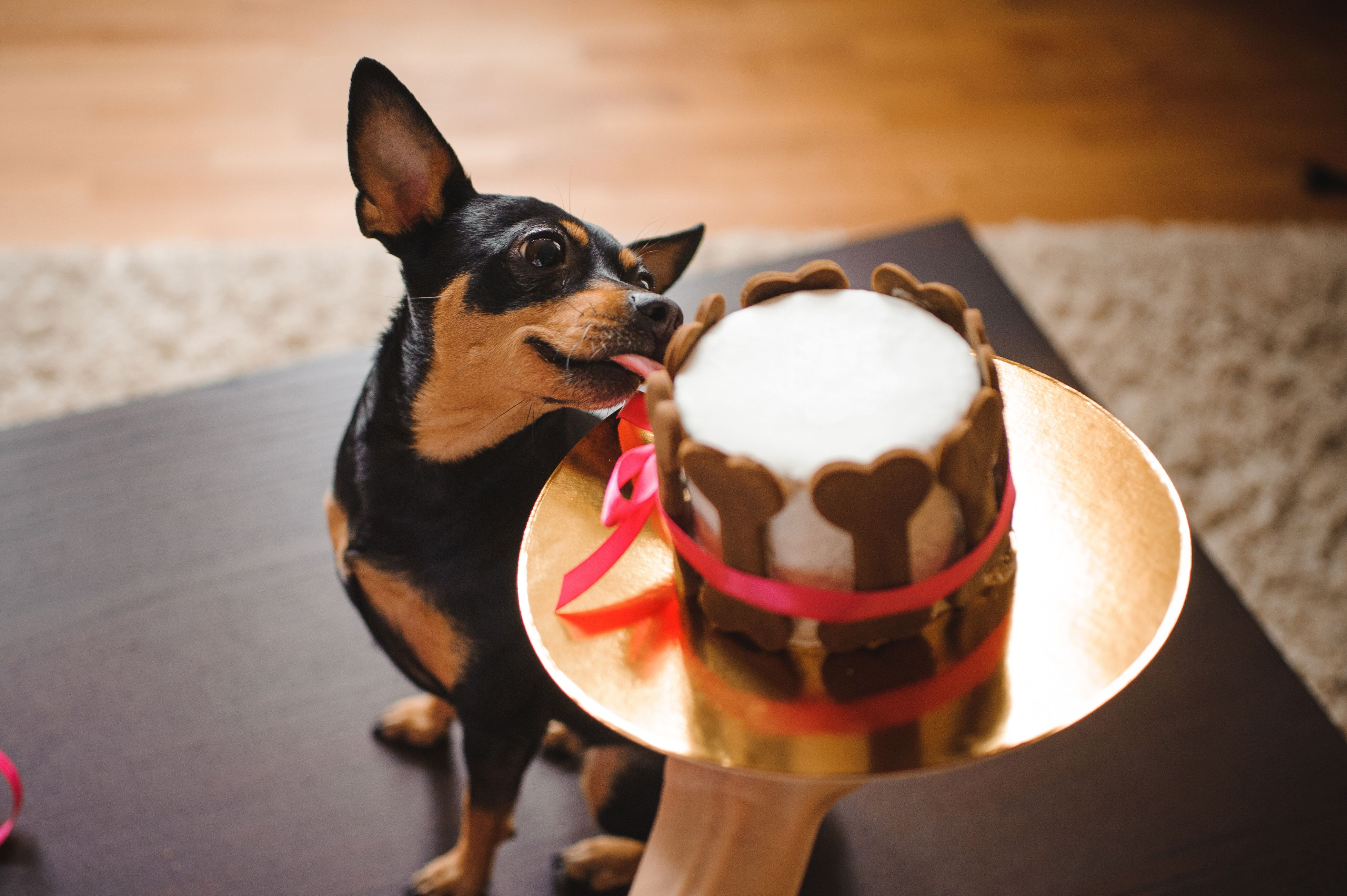 Pawfectly Easy DIY Dog Treat Recipes - cover